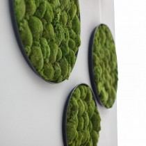 Lonjew Wall Art - Moss Round Wall Art, Greenery Home Decor, Natural Living Plant Frame, Preserved Moss Framed, Botanical Wall Hanging (15.7 inches)