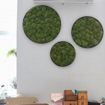 Lonjew Wall Art - Moss Round Wall Art, Greenery Home Decor, Natural Living Plant Frame, Preserved Moss Framed, Botanical Wall Hanging (19.6 inches)